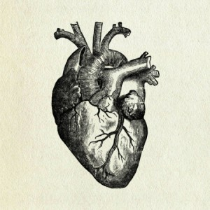 heart-medical-drawing-300x300