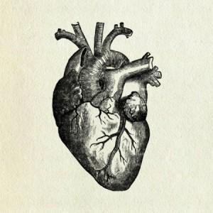 heart-medical-drawing-300x300