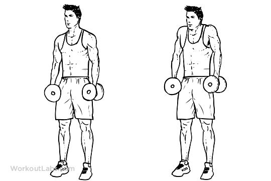 les 5 muscles que l u2019on oublie souvent