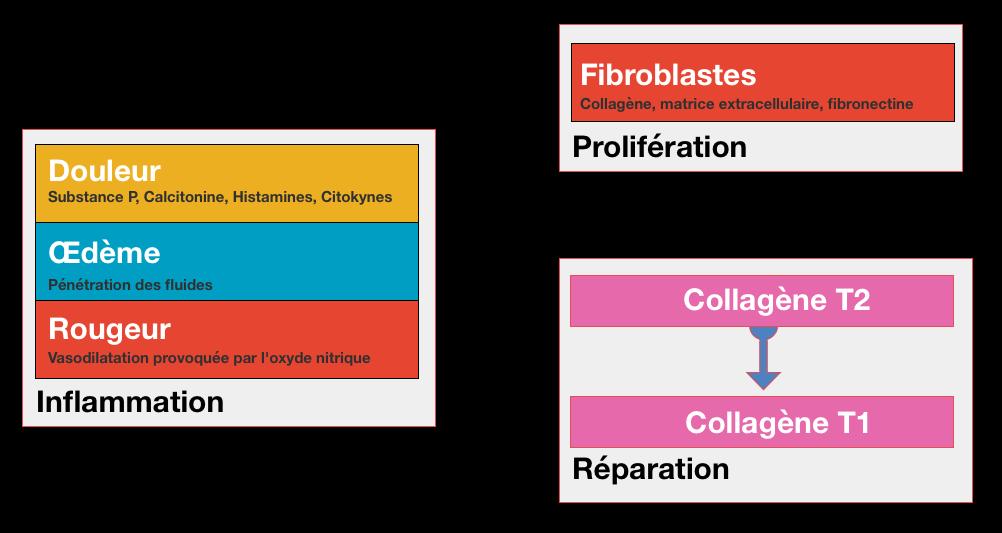 etapes-guerison